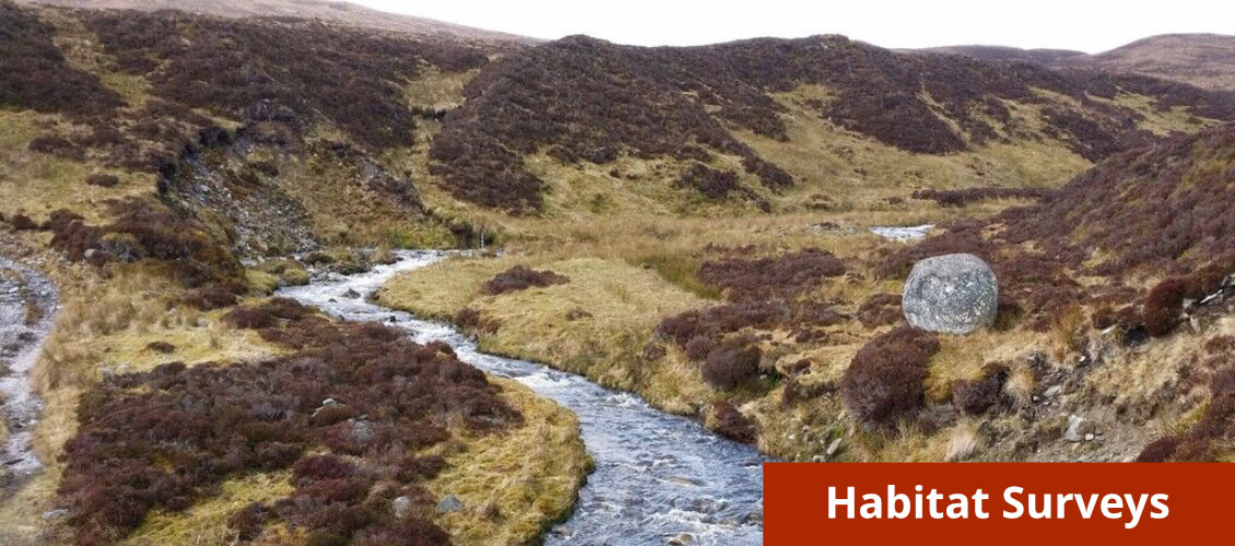 Habitat Surveys from Wild Surveys