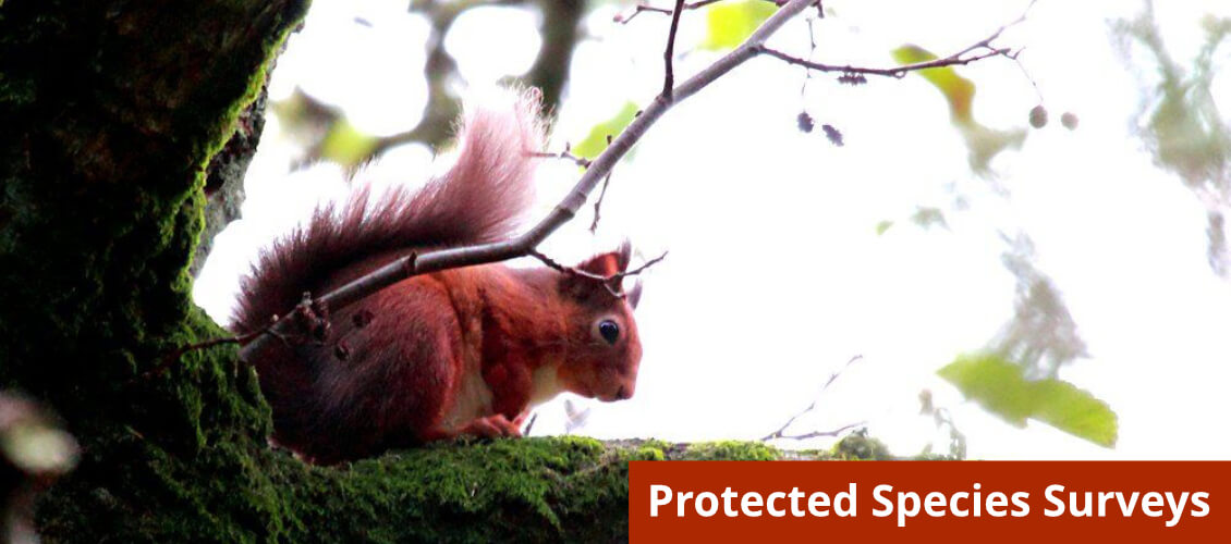 Protected Species Survey from Wild Surveys